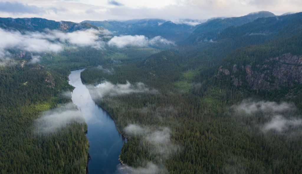 Beautiful Boreal Forest scenery